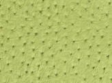 Covington Ensenada LIME Fabric