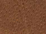 Covington Ensenada SEDONA Fabric