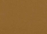 Covington Pachino BUTTERSCOTCH Fabric